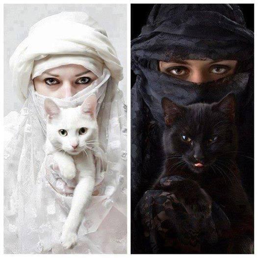 Поличбата на котките