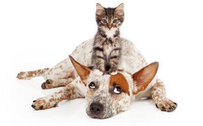 Биополето на кучетата и котките